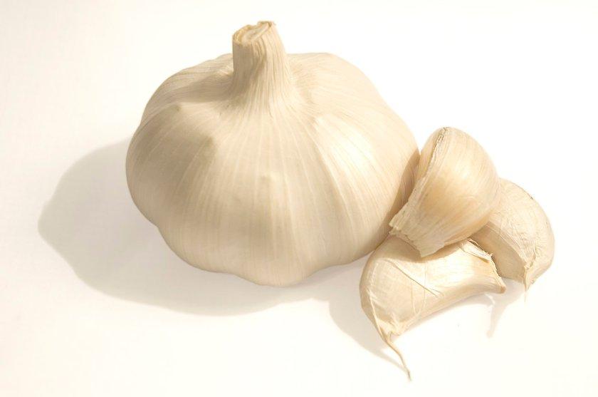 garlic-1326168