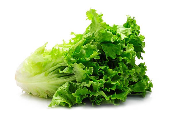 green fresh lettuce. studio shot.Click below to see other images of vegetables: